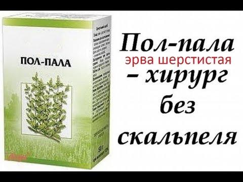 Пол-пала (Эрва шерстистая) леченая трава - как растворить камни в почках и желчном